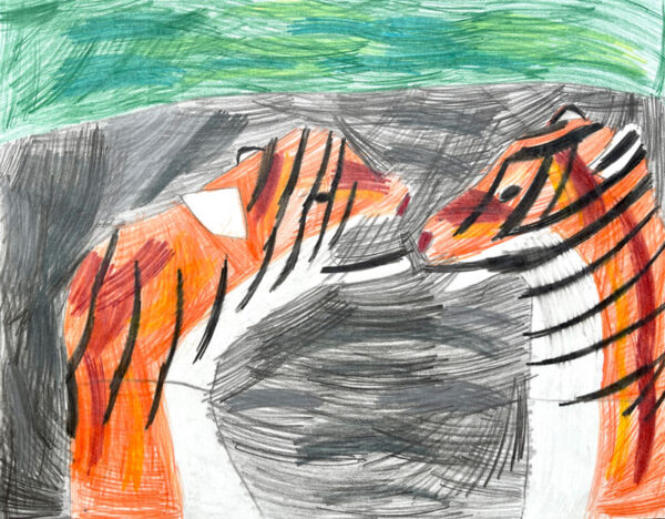 Coloured pencil drawing of two tigers by Tim Crnkovic
